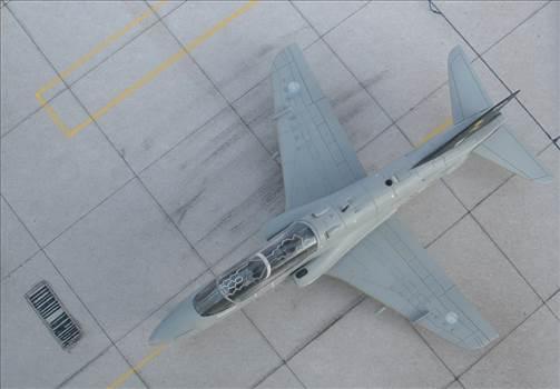 Hawk-44.JPG by giorgion
