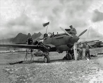 Bellows Field P-40B.jpg by modeldad