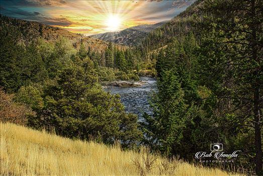 On The Road To Cody, Wy.  Wapiti, Wyoming by Buckmaster