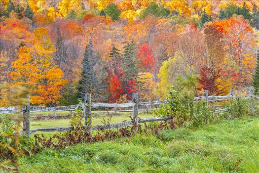 Fence in Foliage - Vibrant Colors of Autumn in Vermont