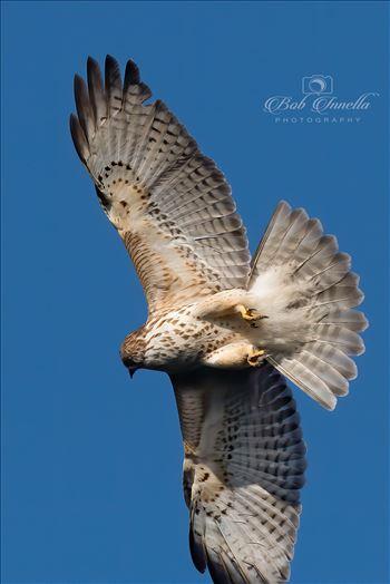 Hawk In The Sky by Buckmaster