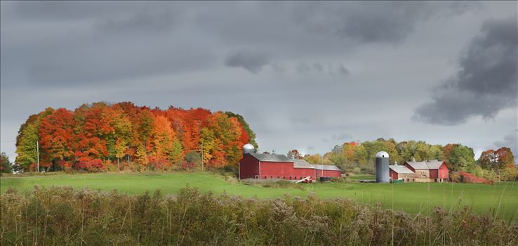 Vermont Red Barns by Buckmaster