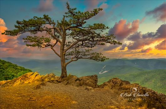 Blue Ridge Parkway, Virginia by Buckmaster