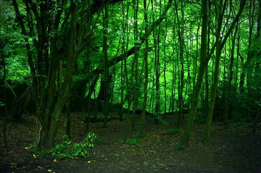 Green Woods by NFIDDI