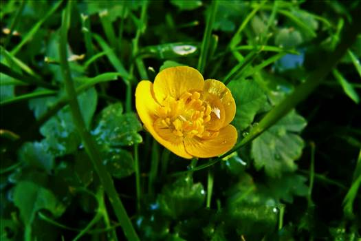 Yellow Flower by NFIDDI