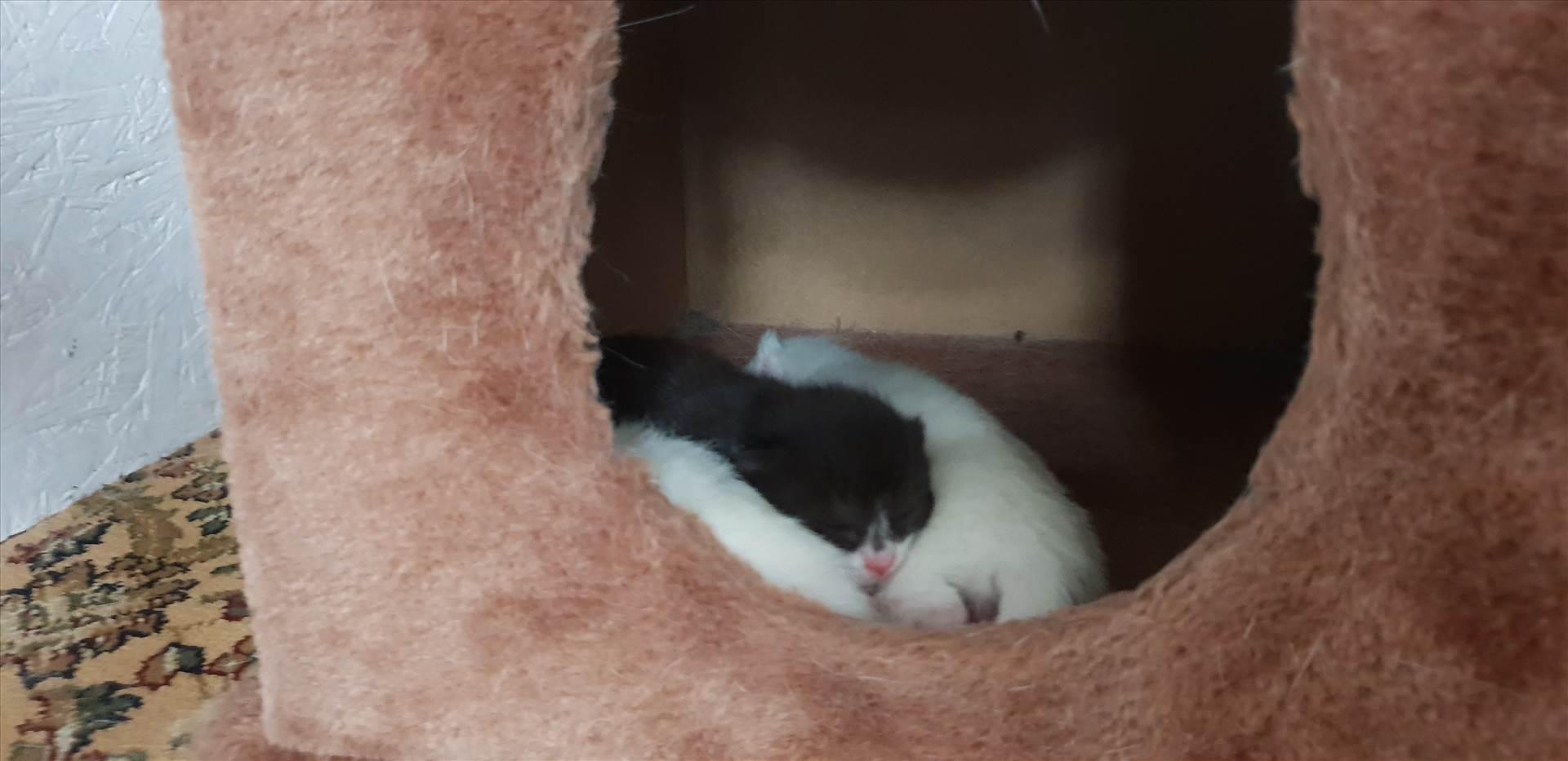 Kittens Paws 10 Jan 2019 born 6th Jan .jpg  by Mo