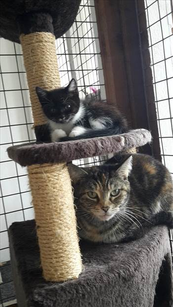 mittens and jinx  29 jun 2017.jpg -