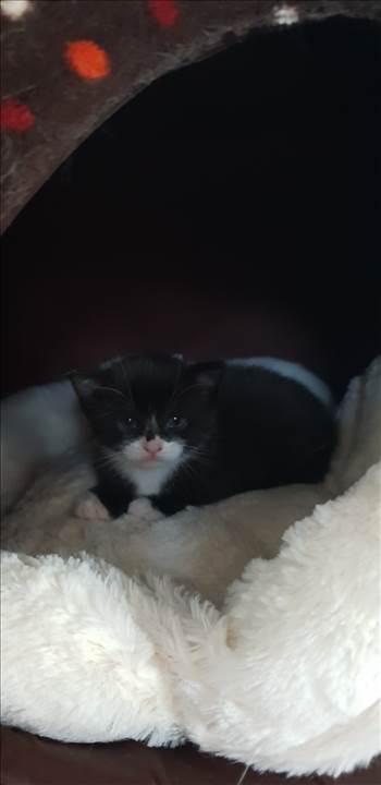 kittens 31 Jan 2019 Felix 2.jpg -
