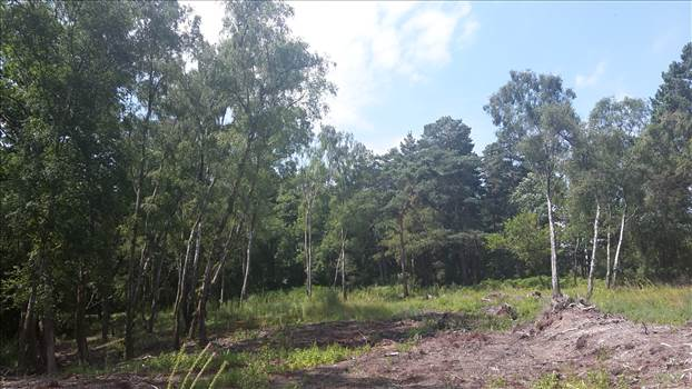 Lavington Common 23 3 Jul 2018.jpg -