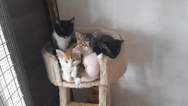 Kittens PAWS 17 Aug 2017.jpg -
