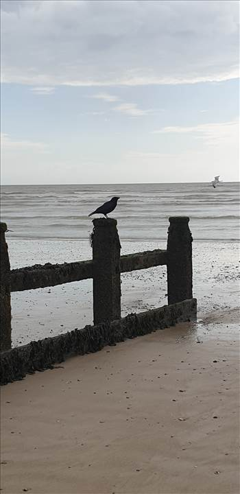 Littlehampton East Beach 12 18 Mar 2019.jpg -