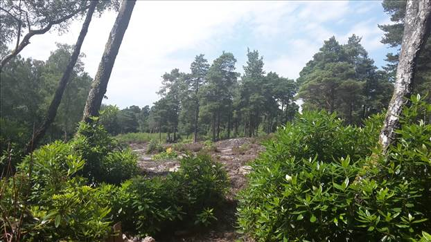 Lavington Common 15 3 Jul 2018.jpg -