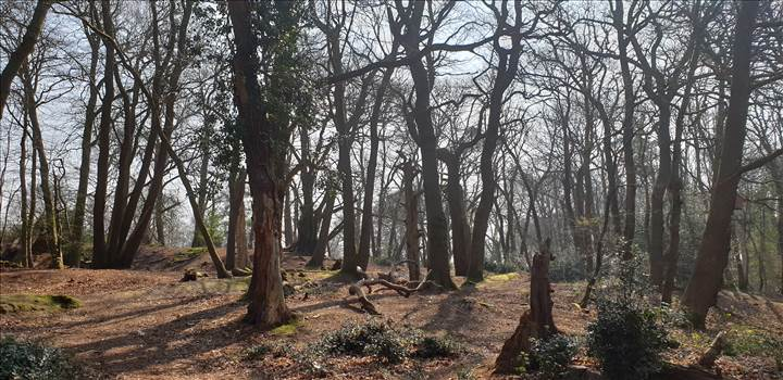 Weymouth Thomas Hardys Cottage Woods Mar Apr 2019.jpg -