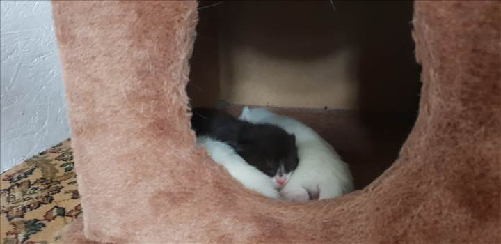 Kittens Paws 10 Jan 2019 born 6th Jan .jpg -