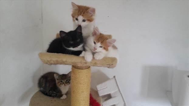 Kittens PAWS 27 Jul 17.jpg -