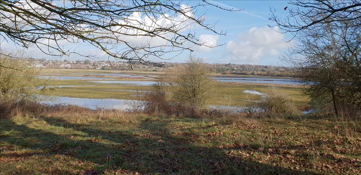 Pulborough Brooks 4 19 Feb 2019.jpg -