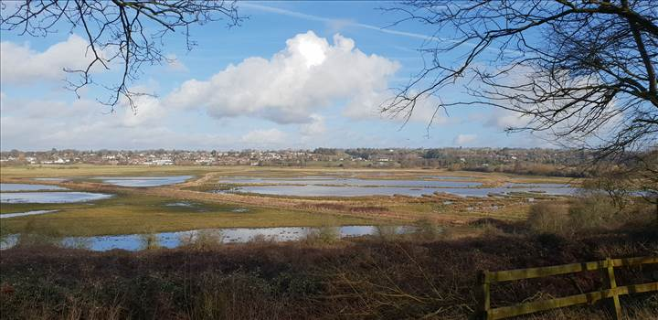 Pulborough Brooks 5 19 Feb 2019.jpg -