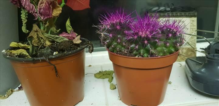 cactus.jpg -