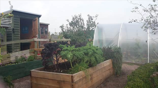 Petworth Community gardens 26 Sept (3).png -