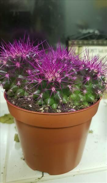 Cactus 2.jpg -