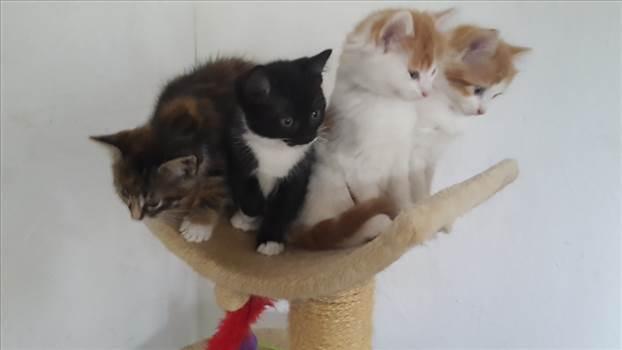 Kittens PAWS 13 Jul 17.jpg -