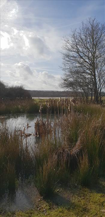 Pulborough Brooks 3 19 Feb 2019.jpg -