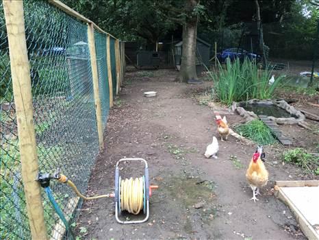 bird enclosure.jpeg -