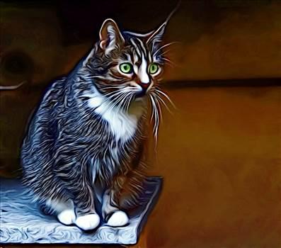 cat-3990266_960_720.png -