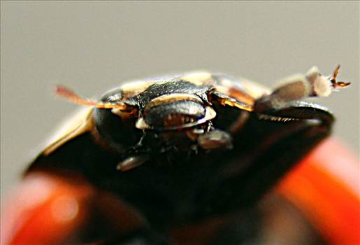 ladybugfaceIMG_2806_Fotor.jpg by 10206463230800809
