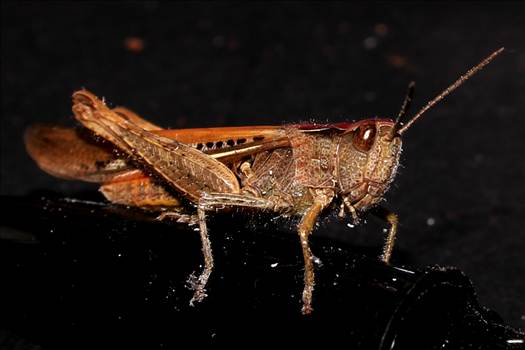grasshopperIMG_6651_Fotor.jpg by 10206463230800809