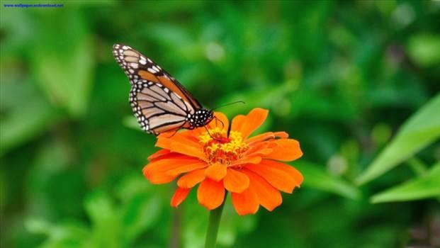 والپیپر-پروانه-زیبا_1299422198.jpg by mohsen dehbashi