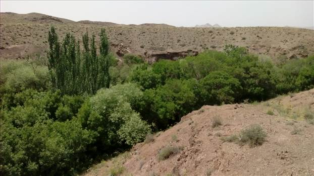 کوهسنگ by mohsen dehbashi