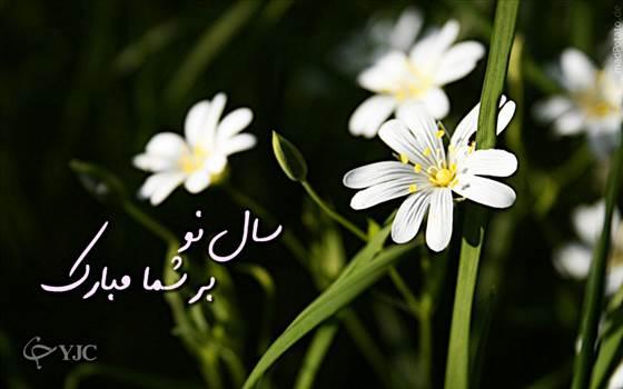 2.jpg by mohsen dehbashi