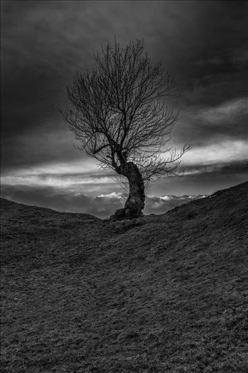 Lone tree by philreay