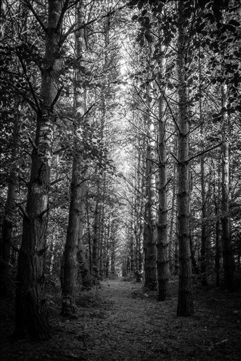 Into the woods by philreay