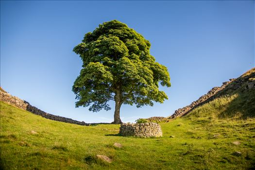 Sycamore Gap by philreay