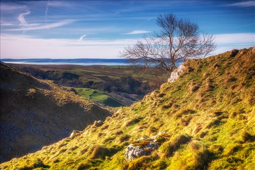 High above the valley - This lone tree sits high above the village of Malham in the Yorkshire Dales.