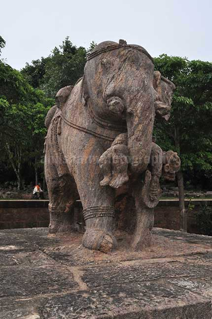 Monuments- Sun Temple Konark (Orissa) Richly carved stone sculpture of an elephant holding his wounded master with his trunk at Konark Sun Temple near Bhubaneswar, Orissa, India. by Anil Sharma Fotography