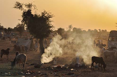 Fairs- Nagaur Cattle Fair (Rajasthan) Nagaur, Rajasthan, India- Febuary 10, 2011: Dusty and smoky evening, farmers with their families cattles and bullcarts at the Nagaur cattle fair, Nagaur, Rajasthan (India). by Anil Sharma Fotography