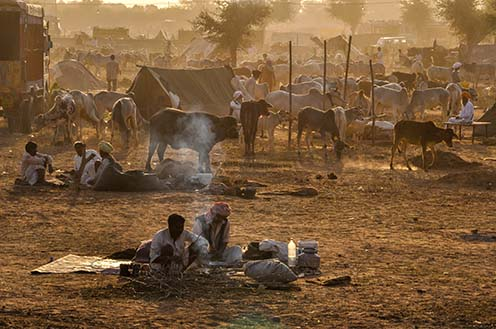 Fairs- Nagaur Cattle Fair (Rajasthan) 0210  Nagaur, Rajasthan, India- Febuary 10, 2011: Sunset time, farmers with their families cattles and bullcarts at the Nagaur cattle fair, Nagaur, Rajasthan (India). by Anil Sharma Fotography