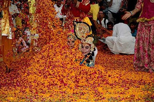 Festivals- Holi and Elephant Festival (Jaipur) - People sprinkling rose and merigold petals on Radha-Krishana at Holi and Elephant Festival at jaipur, Rajasthan (India).