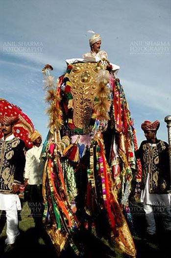 Festivals- Holi and Elephant Festival (Jaipur) - A decorted Elephant with owner at Holi and Elephant Festival at jaipur, Rajasthan (India).