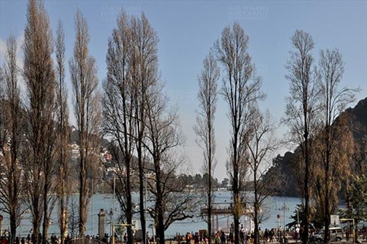 Travel- Nainital (Uttarakhand) - Nainital, Uttarakhand, India- November 13, 2015: Naini Lake and beauty of leafless popular tree at Band stand Mallital, Nainital, Uttarakhand, India.