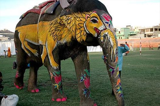 Festivals- Holi and Elephant Festival (Jaipur) - A decorate Elephant with owner at Holi and Elephant Festival at jaipur, Rajasthan (India).\r\n.