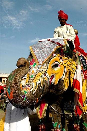 Festivals- Holi and Elephant Festival (Jaipur) - A decorated Elephant welcomeing tourists at Holi and Elephant Festival at jaipur, Rajasthan (India).
