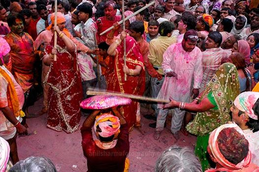 Festivals- Lathmaar Holi of Barsana (India) - A man protecting himself from womens of Barsana hitting on his shield with their sticks during Lathmaar Holi at Barsana.