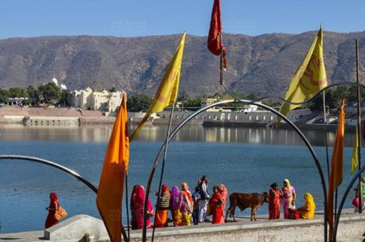 Fairs- Pushkar Fair (Rajasthan) - Pushkar, Rajasthan, India- January 16, 2018: A group of Women devotees praying at the at the Holy Pushkar Sarovar at Pushkar, Rajasthan, India.