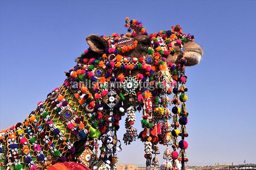 Rajasthani folk performers exhibit their traditional skills at Jaisalmer Desert Festival.