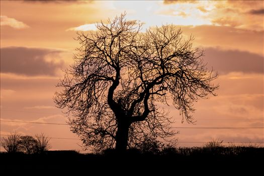 Single Tree Sunset by AJ Stoves Photography