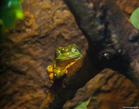 Tree Frog.jpg - undefined